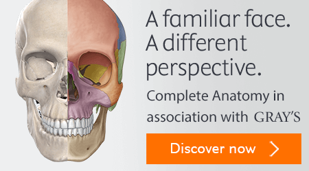 Complete Anatomy in association with Gray's